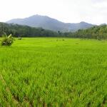 Besuch im ländlichen West-Java