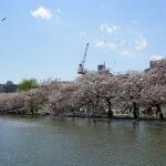 Japans Kirschblüten-Wahnsinn