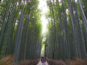 sorglos-reisen-Schreibe-für-uns-Arashiyama-Bambuswald-Kyoto-Japan