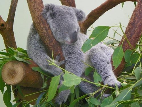 Wenn sie eine Reise nach Australien planen, sehen sie sich diese hilfreichen Australien Reisetipps an, um zu wissen, was sie erwartet und das beste aus ihrem Urlaub zu machen.