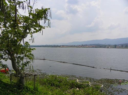 Wang Nam Khiao, Thailand, das 2.5 Autostunden von Bangkok entfernt liegt, besticht durch seine schöne, der Toskana Italiens ähnliche Landschaft. Lesen sie mehr!