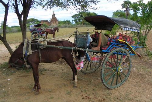 bagan-luxury-horsecart 100 1247
