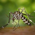 Effektiver Mückenschutz in den Tropen